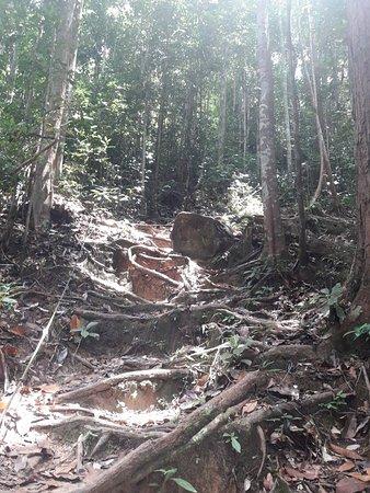 Taman Negara National Park, Malaysia: 20181008_132258_large.jpg