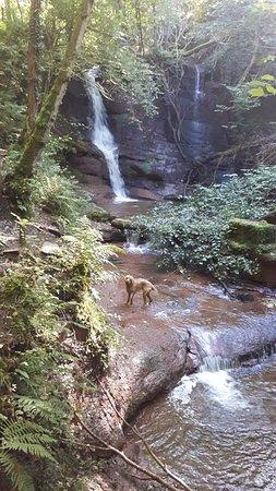 Talgarth, UK: Water dog