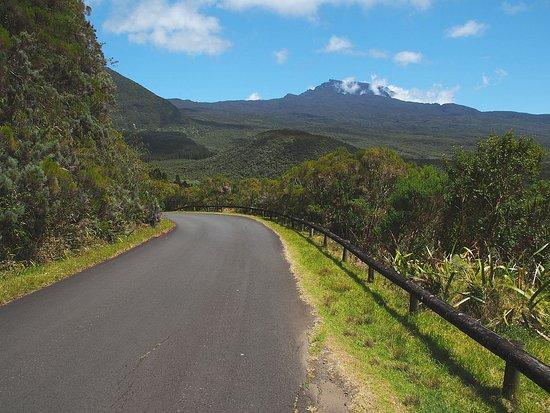 Salazie, Reunion Island: La forêt de Bélouve