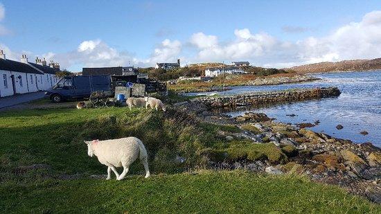 Foto de Isle of Coll