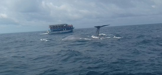 Whale Watching Mirissa with Geeth Foto