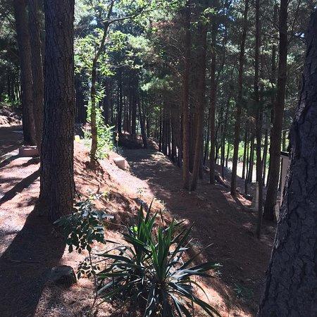 Gimigliano, Italie : Area Pic Nic con percorsi nella natura