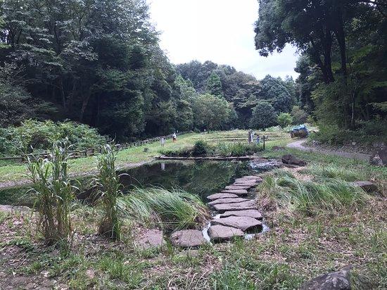 Tadao Park