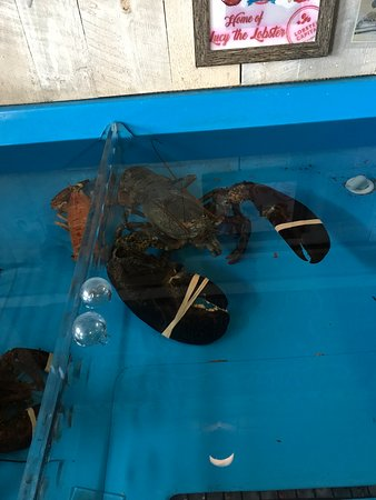 Barrington, Kanada: Big lobster in the tank , very clean tank no fishy smell
