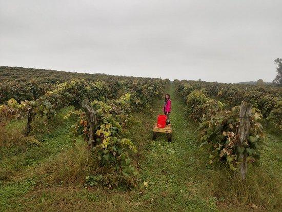 Dinges Fall Harvest