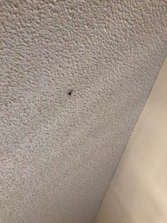 LaFayette, Géorgie : bugs