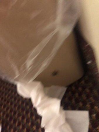 LaFayette, Géorgie : bugs in bed
