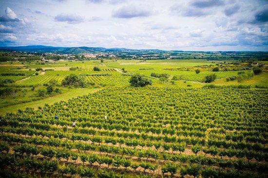 Pouzolles, Francja: Vue des Côtes de Thongue