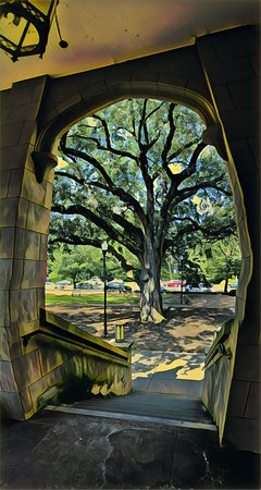 Trinity Episcopal Cathedral: The Oaks. These trees, right outside the side door, must be over 200 years old. I modified the p