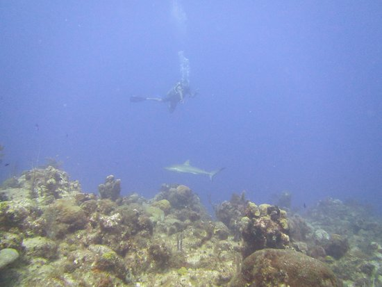 Flamingo Divers: One of the several sharks we came across.