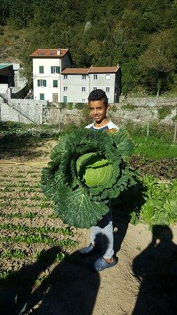 Montoggio, อิตาลี: Un cavolo piccolo piccolo