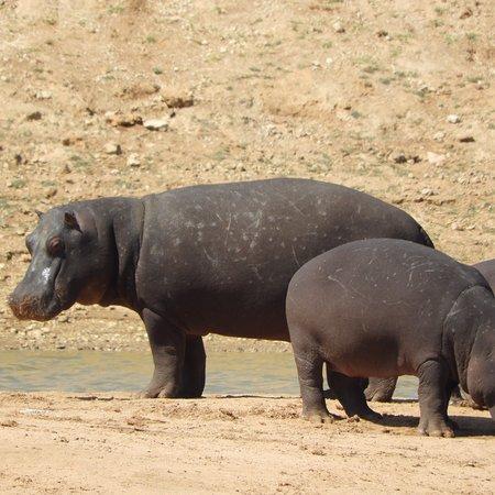 Erindi Game Reserve, Namibia: photo0.jpg