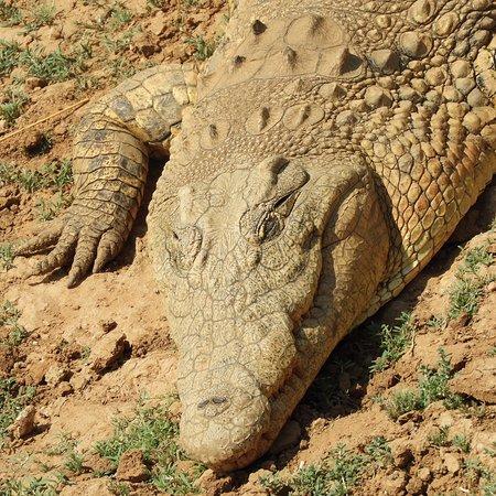 Erindi Game Reserve, Namibia: photo2.jpg