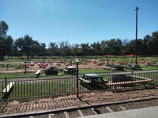 Wheatland, CA: Bishop's Pumpkin Farm