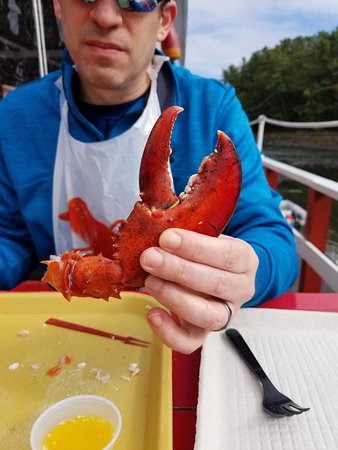 Kittery Point, ME: Just to give you an idea of the size of the claws.