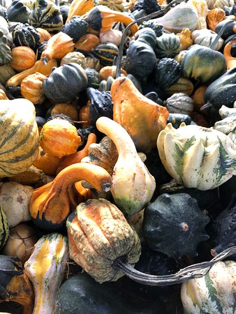Warren, ME: Gourds