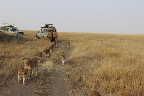 Asili Adventure Safaris
