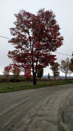 NEK Adventures ATV & Snowmobile Tours: Fall foliage tour
