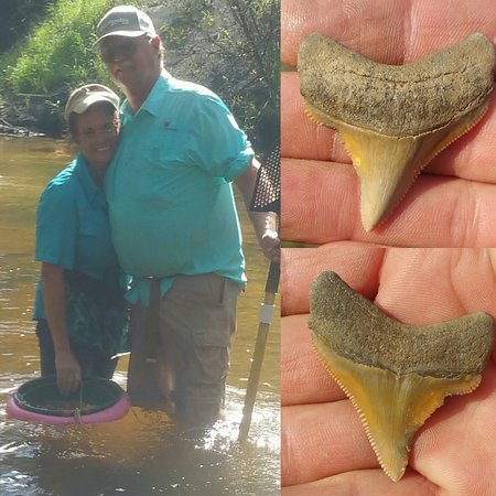 Davenport, FL: They found the golden megalodon