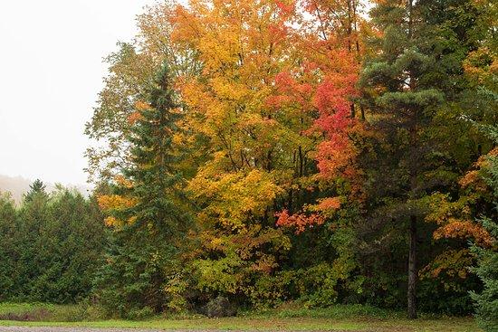 Farmhouse Pottery: Autumn colours at the property