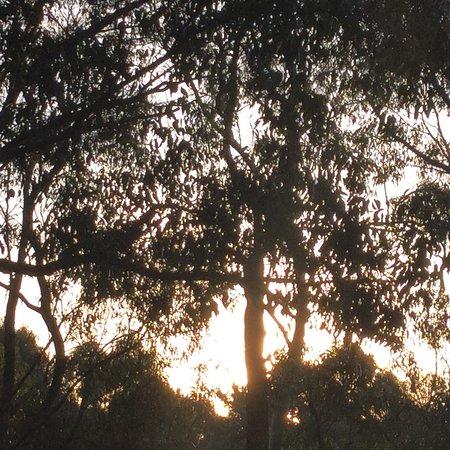Barongarook, Australia: photo0.jpg