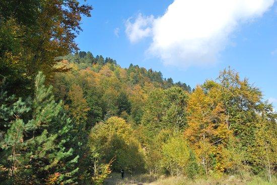 Pieria Region, اليونان: υπέροχη φύση