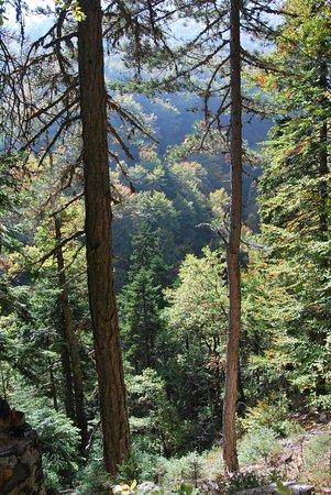 Περιοχή Πιερίας, Ελλάδα: πυκνό δάσος