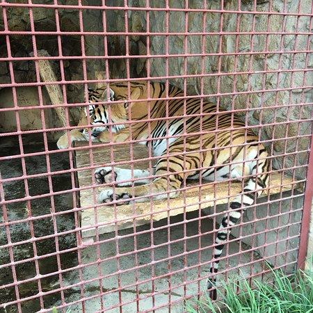 Ryazhsk, Russia: Ряжский зоопарк