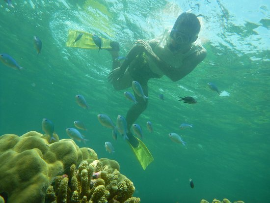Shimoni, Kenya: Snorkeling in the marine park