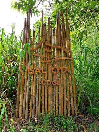 Entspannen im Dschungel