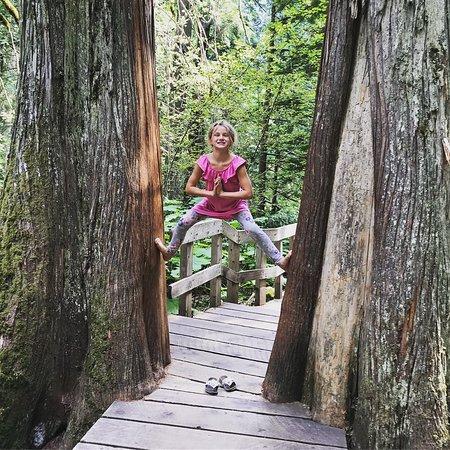 Rotzeder Picture Of Giant Cedars Boardwalk Trail Revelstoke