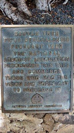 Banyan Tree Park: The Beautiful Brayan Tree
