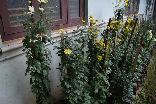 Siddapur照片