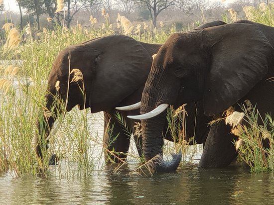 Lower Zambezi National Park, Ζάμπια: boat trip on the Zambezi