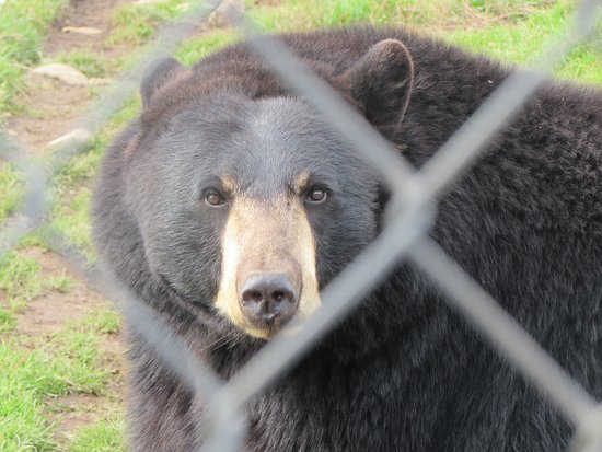 Saint-David-de-Falardeau, Canadá: ours