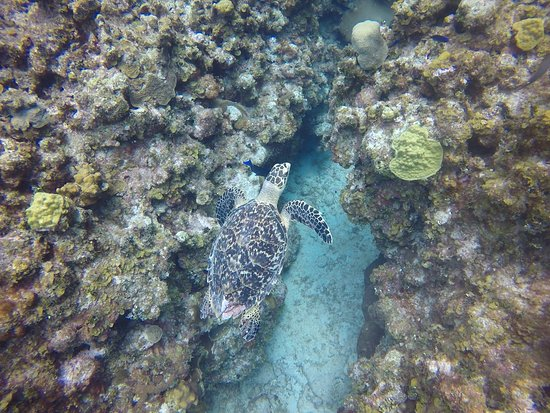 Don Foster's Dive Cayman: Turtle during dive