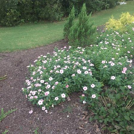 Wilson Botanical Gardens Image