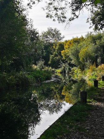 North Warnborough, UK: Basingstoke canal