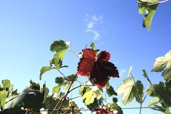 Verrua Savoia, Italien: FB_IMG_1539120767480_large.jpg