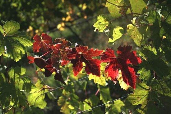 Verrua Savoia, Italien: FB_IMG_1539120725925_large.jpg