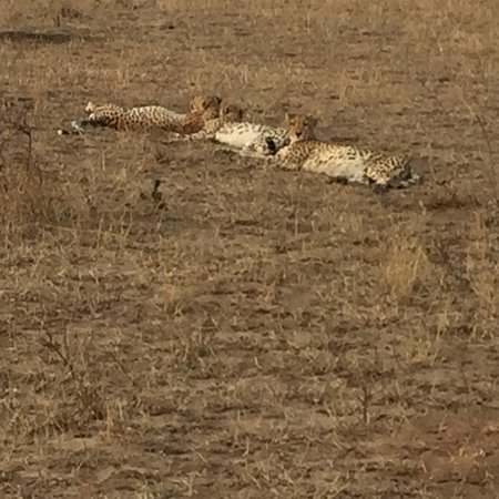 Londolozi Private Game Reserve, South Africa: photo4.jpg