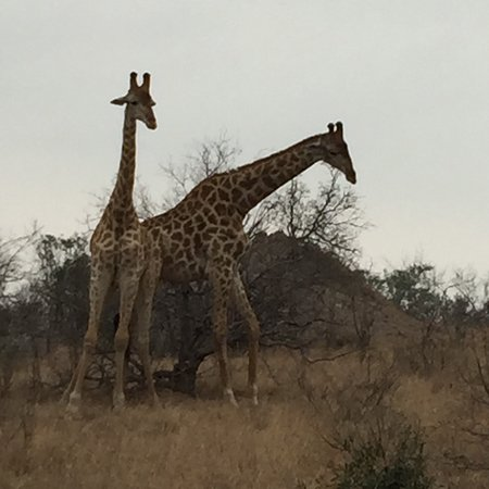 Londolozi Private Game Reserve, South Africa: photo5.jpg