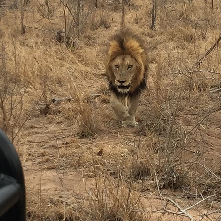 Londolozi Private Game Reserve, South Africa: photo6.jpg