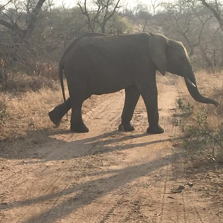 Londolozi Private Game Reserve, South Africa: photo8.jpg