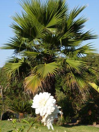 Longueira, Portugal: Palmeira
