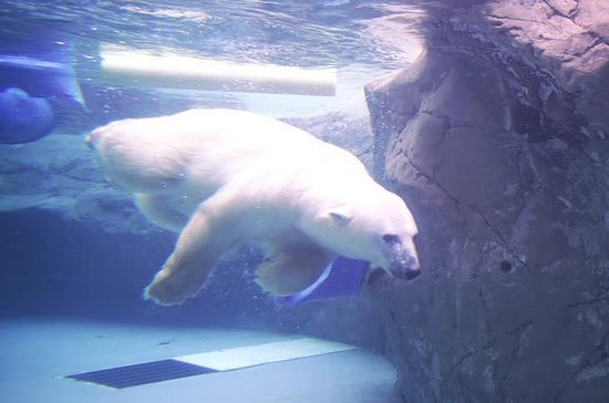 Winter Tour: Visit Asahiyama Zoo...
