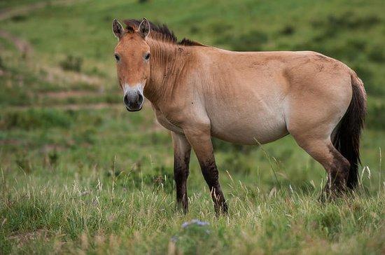 Cheval sauvage - Parc national de...