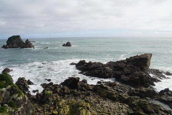 Tauranga Bay Seal Colony