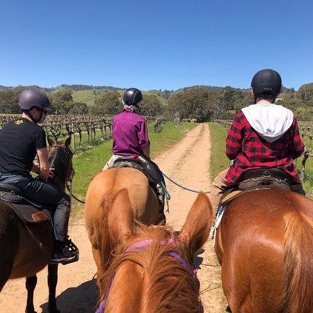 1.5小時巴羅莎山谷騎馬:上山和越過山丘照片
