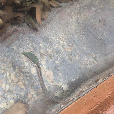 Snake Park: photo5.jpg